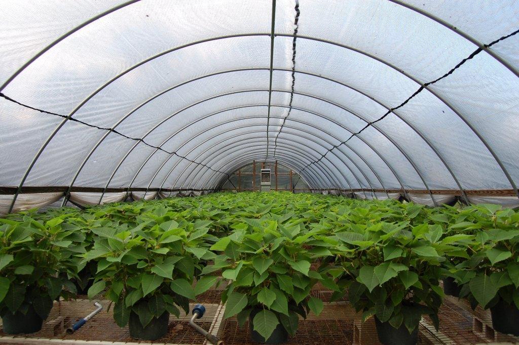 Пленка тепличная - эффективный материал для оптимального роста и развития растений картинка
