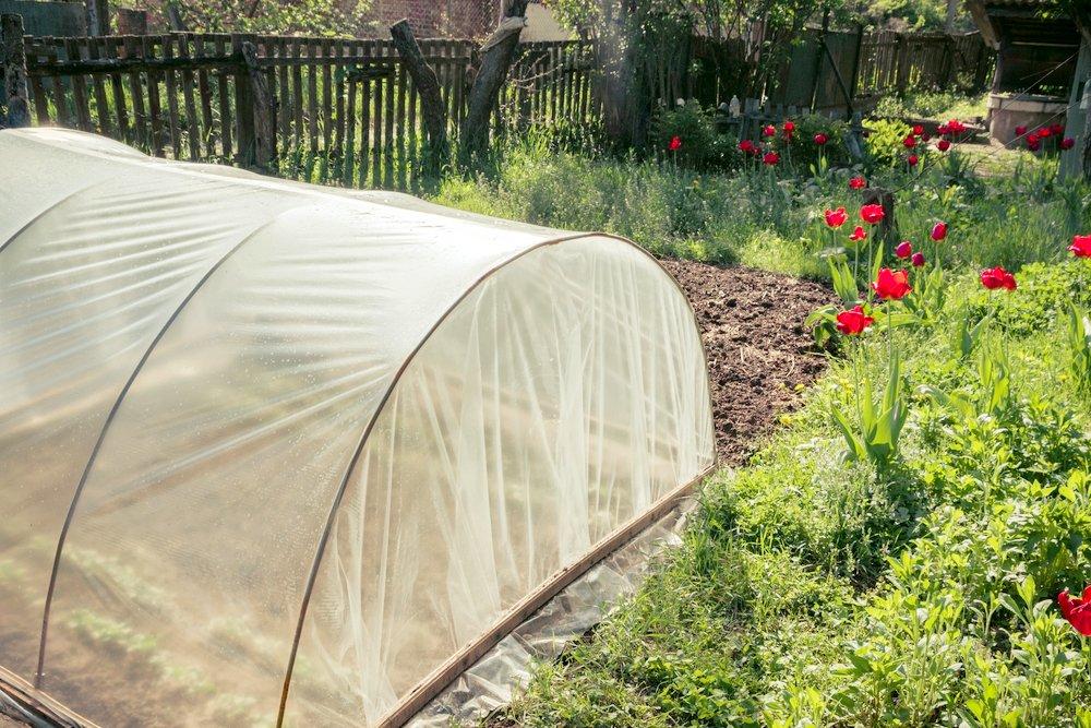Парники и теплицы для дачи - отличный способ повысить урожайность картинка